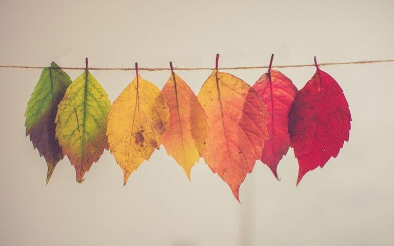 Nieuw Organiseren Blog Cultuurverandering? Leuk!