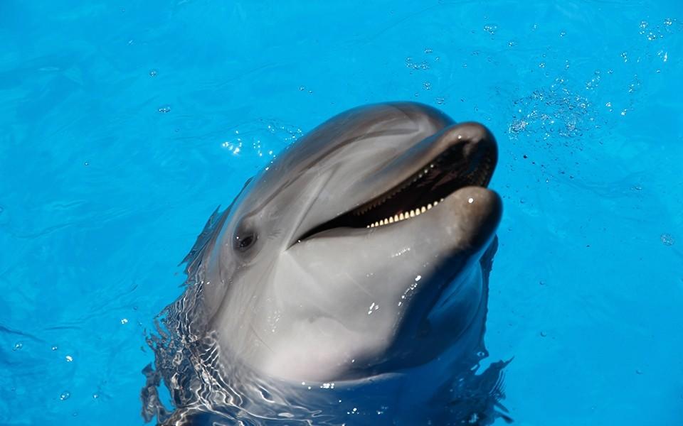 Nieuw Organiseren Blog Wat wij kunnen leren van dolfijnen
